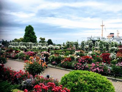 ガーデンネックレスその3 山下公園はバラが満開 そして赤レンガ