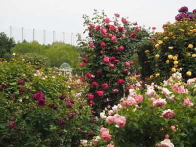 薔薇の見頃にバラ園へ