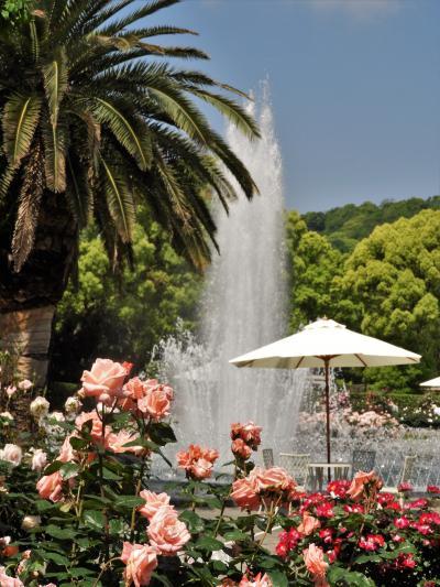 バラの甘い香りに包まれる市立須磨離宮公園