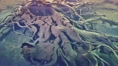 飛騨・富山・長野を周遊 (10-5) ますのすしミュージアムと魚津埋没林