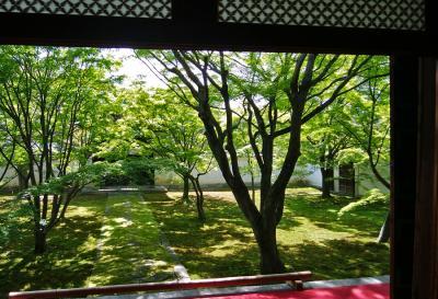 妙覚寺の法婆園・青紅葉の庭へ