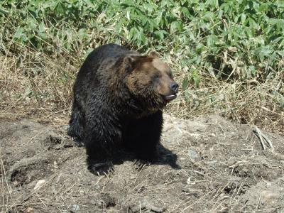 熊牧場じゃないよ、べあマウンテンだよ(^▽^)