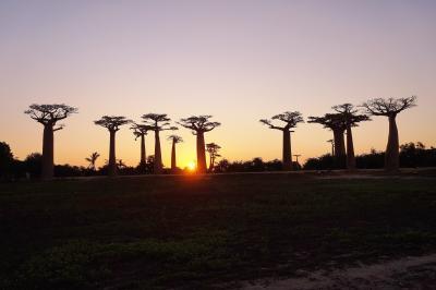 マダガスカルへの旅----ムルンダヴァ