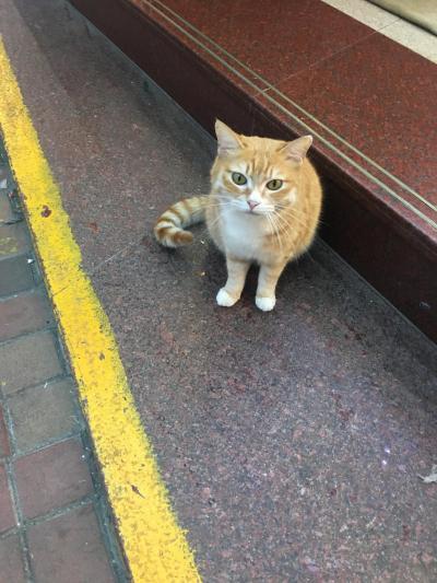 GW2018香港 猫を求めてさまよう西環パトロール部①