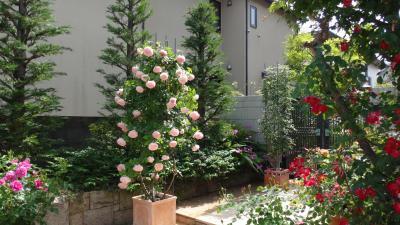奈良の個人宅のバラ園めぐり。