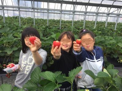 子連れ☆イチゴ狩りin京都<2018日帰りおでかけ>~JAやましろファーム&けいはんな記念公園~