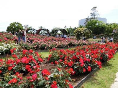 五月晴れに誘われ、大阪万博記念公園・自然文化園 「平和のバラ園(PEACE ROSE GARDEN)」をホロホロ散歩。(2018)