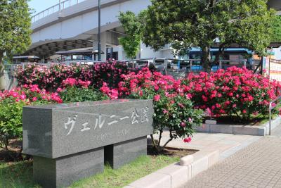 今年は名残のバラ、横須賀ヴェルニー公園でバラと艦船を見る。