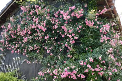 ツアーに選ばれたオープンガーデン1 バラの香りに包まれて♪ Bluemoon Cottageさん