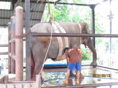 タイ像の保護センター
