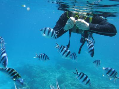 梅雨入り・雨予報の沖縄へ その1は慶良間の海でシュノーケルと那覇