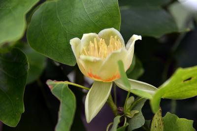 5月新宿御苑の花々