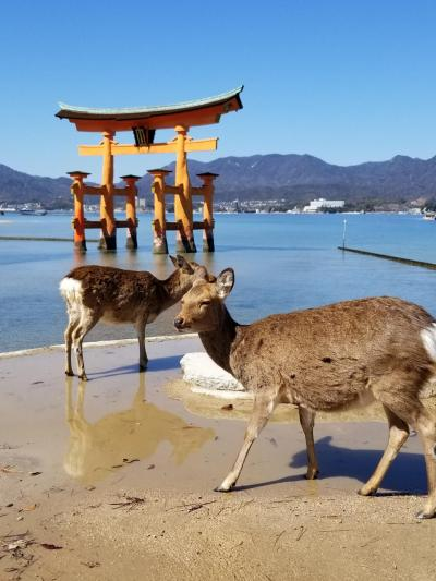 広島クラウンプラザホテル、酔心のかき料理と宮島観光