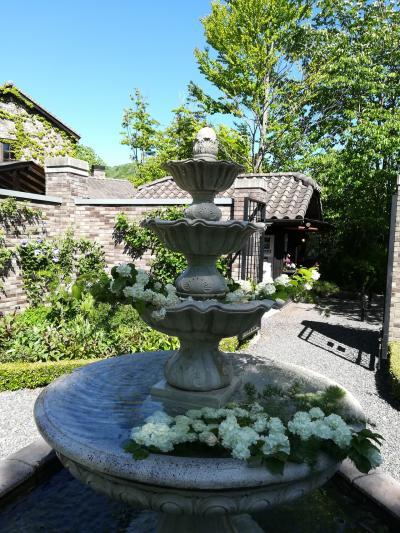 【軽井沢】バラの季節にもう少し。藤の花咲く新緑の軽井沢♪