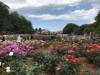 ばらまつり2018@与野公園~見事なバラ園の春のお祭り~