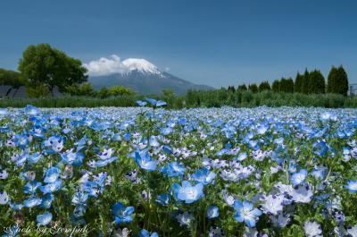 2018年山中湖ロッジ滞在記(1) 山中湖村周辺は花盛り、夜な夜な富士五湖を巡り星空撮影
