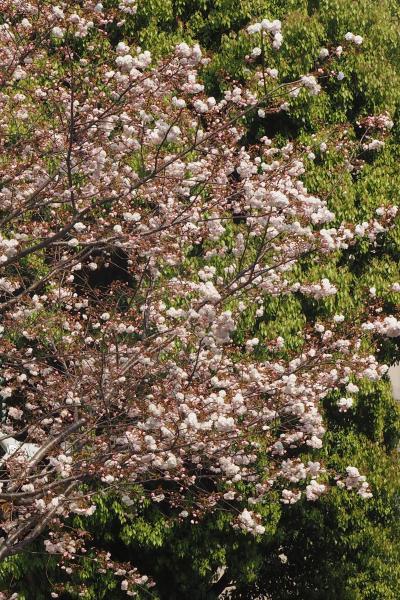 鳥越神社 東京福めぐり⑥ 以外や! 徳川家康公も祀られいたなんて!