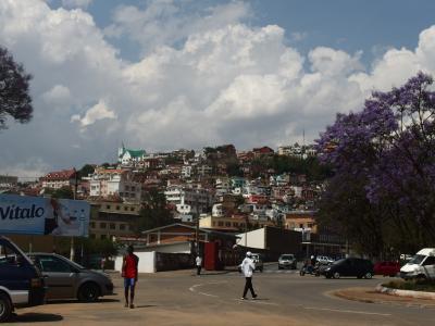 2017夏ケニア&マダガスカル5  キツネザル&ジャカランダの花満開のアンタナナリボ