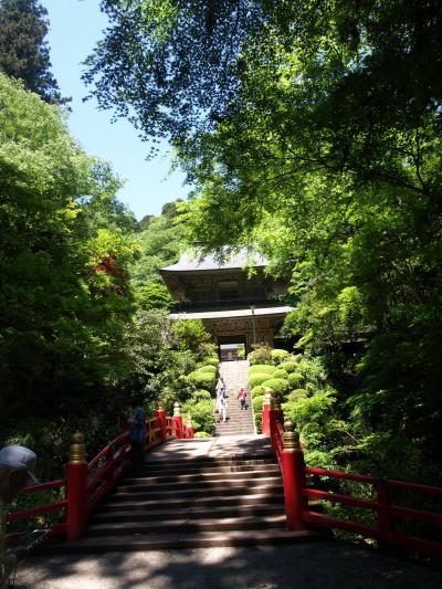 芭蕉の愛した寺