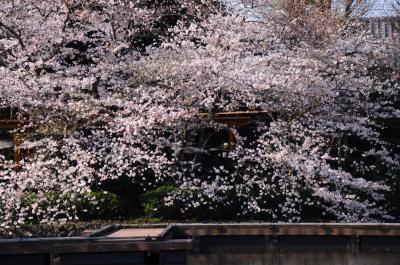 続・鎌倉四季物語【3月】~夜行列車で早朝の鎌倉へ~