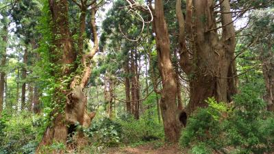 2018 GW 新潟と東北の温泉を巡る旅 【3】 山形で幻想の森を歩く