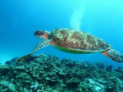 ダイビングと沖縄観光