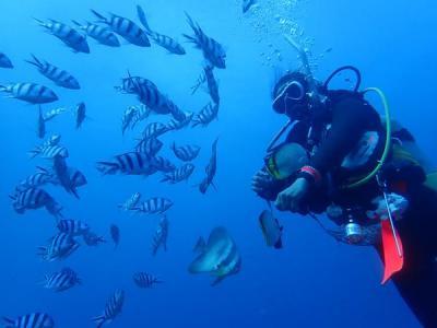 沖縄2018初夏(5)ハワイアンダイニング・ハナホウのロコモコと真栄田岬ダイビング