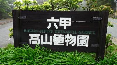 六甲高山植物園(1) 行きの道に咲く花と、入園後のガラス室見学まで。