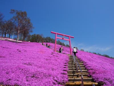 JALのどこかにマイル 4度目のチャレンジでようやく北海道知床へ  満開の桜と美しすぎた芝桜篇