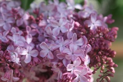 2018.5ライラックの花咲くサッポロへ(②はじめまして♪)