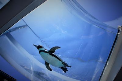ペンギンと蕎麦と温泉