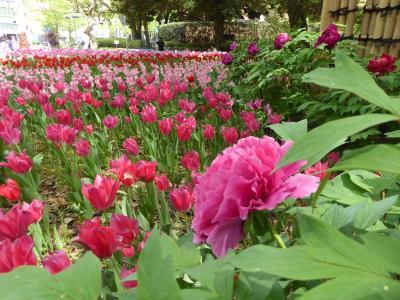 春の優雅な横浜♪ Vol.16 横浜公園♪