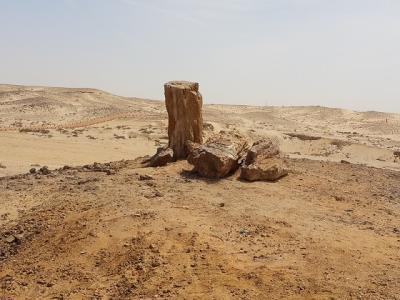 すぐそこ!にある砂漠 その2 石化森林保護区域