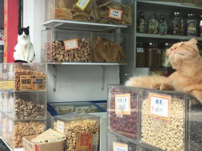 GW2018香港 猫を求めてさまよう西環パトロール部② 蓮香居オフ会とお買い物と・・