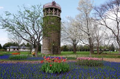 438-我が家定番桜・さくらの花めぐりは、百合が原公園&モエレ沼公園