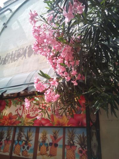 2018春OKINAWA~②日本一早い花火を眺める週末♪
