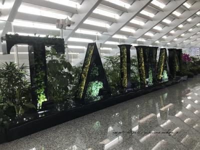 【はじめての台湾旅行1】LCCタイガーエアで羽田早朝発~台湾桃園空港へ。新幹線の旅スタート!