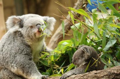 新緑の東山1万歩コースから、東山植物園、動物園を歩く♪