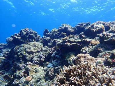 沖縄2018初夏(11)残波岬で潜っちゃおう!梅雨はどこへ?とっても穏やかな海は暖かで