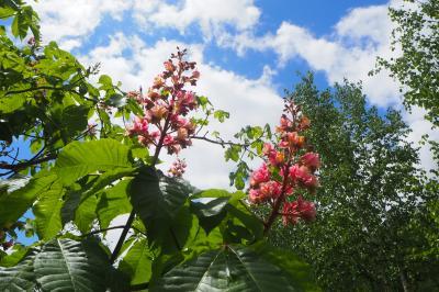 初夏までもう少し! カフェと花畑を巡る小さな旅~中富良野町と美瑛町