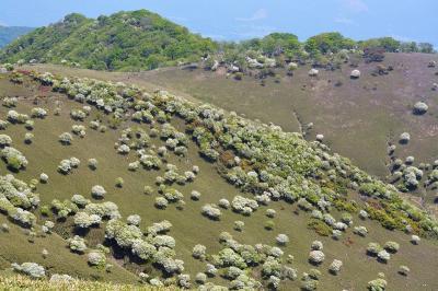 鈴鹿・竜ヶ岳、満開のシロヤシオが当たり年