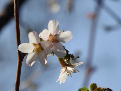 春の軽井沢/北軽井沢♪ Vol.2 遅い春の浅間高原