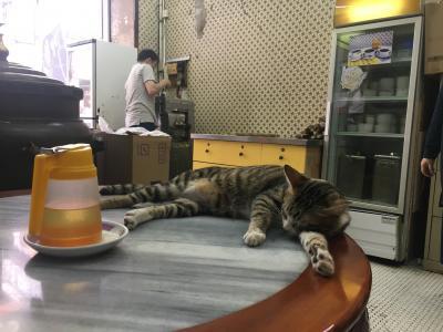 GW2018香港 猫を求めてさまよう西環パトロール部③ 中環散歩の途中から夜の部まで