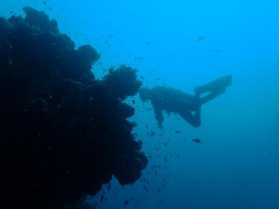 Apo Reef ダイビングクルーズ
