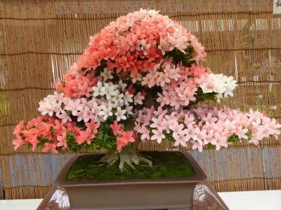 初夏の川口グリーンセンター♪ Vol.1