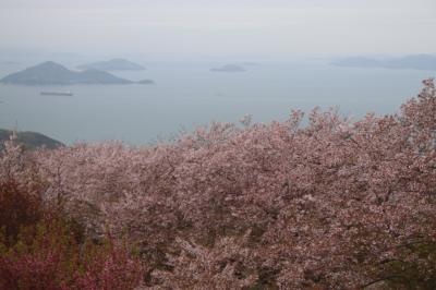 '18 桜を求めて(紫雲出山・観音寺編)