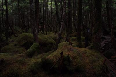 雨の苔森散歩。