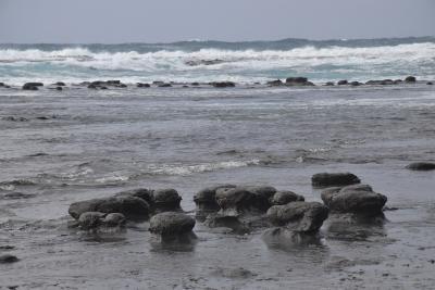 唐音の蛇岩と水仙、畳ヶ浦のノジュール ~岩脈と地層の天然記念物~(島根)