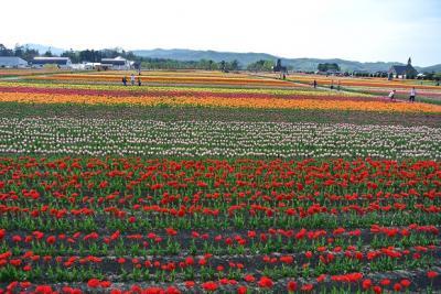 花を見に840kmドライブ、ついでに網走観光・1日目