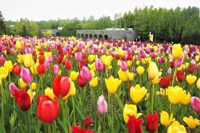 この春最後のお花見に。チューリップ畑とおいしいもの巡り!